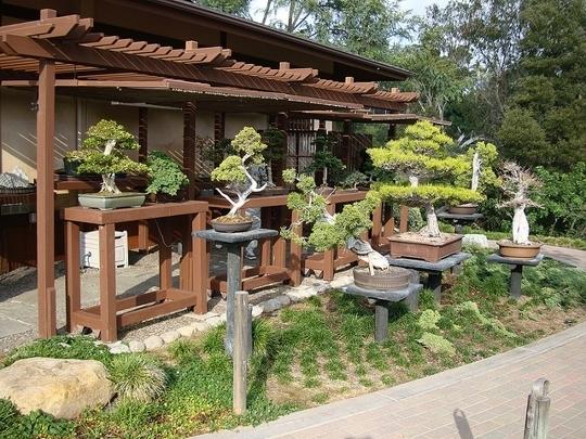 Japanese Friendship Garden Of San Diego San Diego Ca Kid Frien Trekaroo